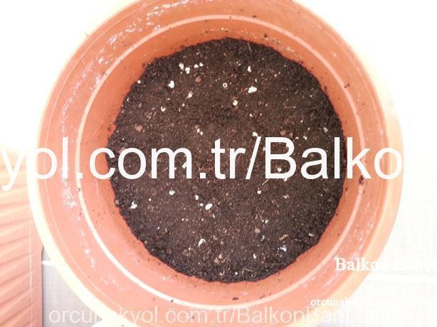 maydanoz ekim hazırlığı